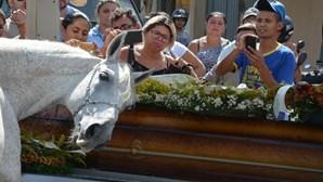Cavalo emociona família ao despedir-se de dono morto