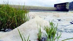 Descarga de químicos polui Tejo na zona de Abrantes