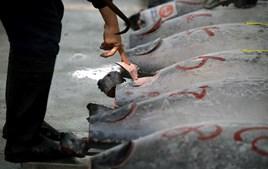 O atum, com 212 quilos, pescado no no norte do Japão, tem um preço equivalente a cerca de 350 mil ienes (2.857 euros) por quilo