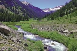 A flora das montanhas rochosas