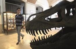 Lourinhã é conhecida como a 'Capital dos Dinossauros'