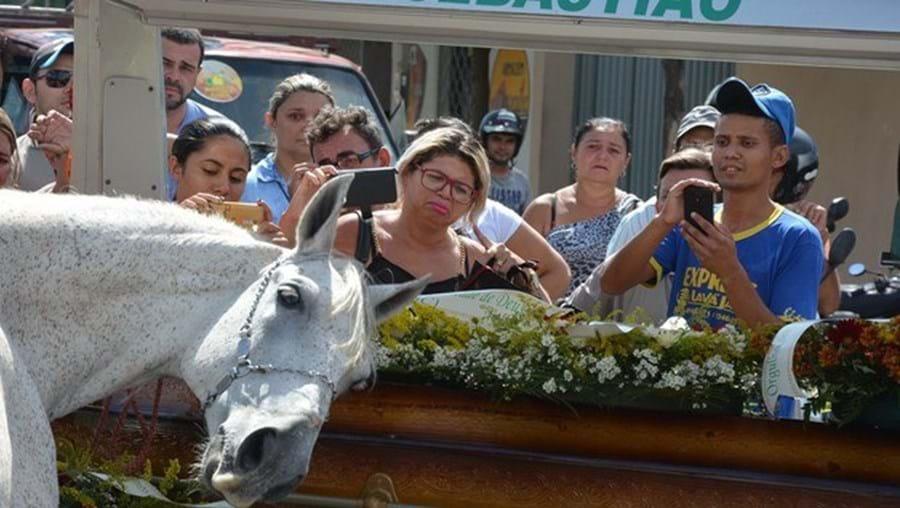 cavalo, animal, brasil, morto, caixão, funeral, emoção