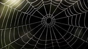 Menino mordido por aranha toma maior dose de antídoto de sempre