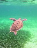 Biodiversidade ideal para adeptos do mergulho