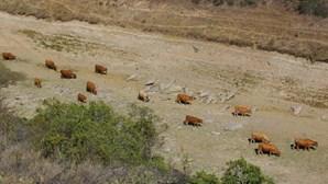 Situação de seca fraca diminuiu em fevereiro e abrange 57% do território