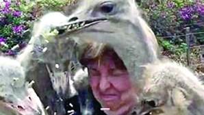 Bando de avestruzes 'ataca' mulher