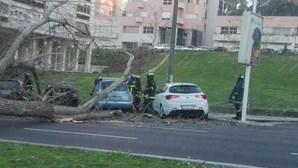 Queda de árvore corta circulação na Avenida dos EUA