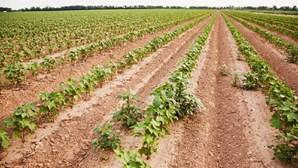 Governo abre concursos para atrair jovens para setor agrícola