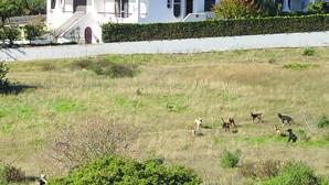 Matilha de cães vadios preocupa moradores