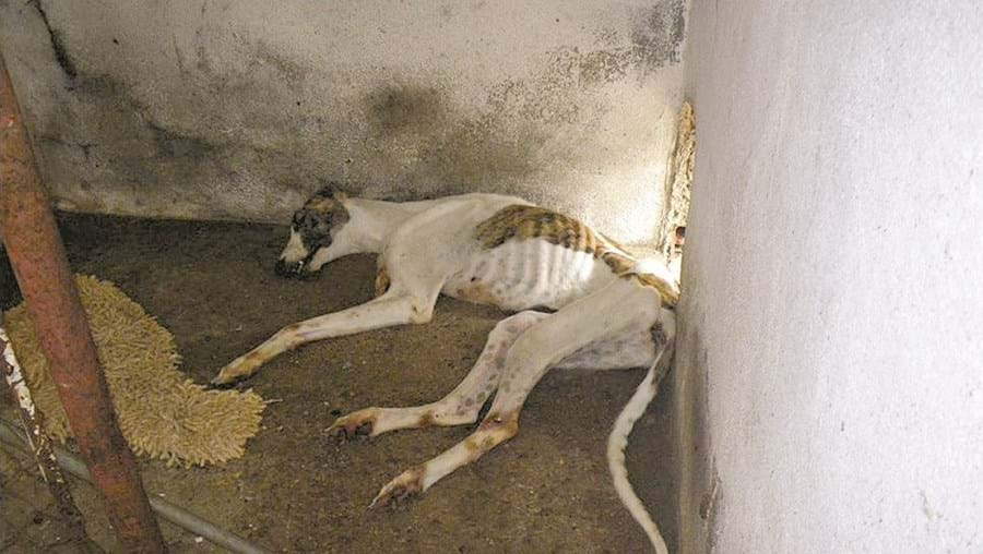 A lei prevê, para casos de maus-tratos que resultam na morte dos animais, penas de prisão até aos dois anos