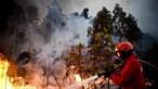 Incêndio em Figueiró dos Vinhos mobiliza quase 100 elementos