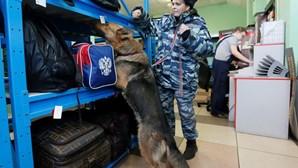Oito detidos por envolvimento no atentado de São Petersburgo