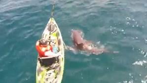 Pescador provoca tubarão depois de ataque