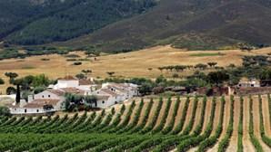 Seca põe em risco 30 mil hectares de culturas no Alentejo