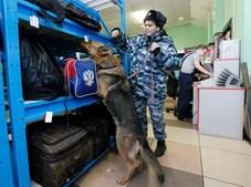 Polícia da Rússia tem feito várias operações em São Petersburgo