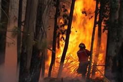 Incêndio devastou empresas em Oliveira de Frades
