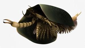 O 'Tokummia katalepsis'