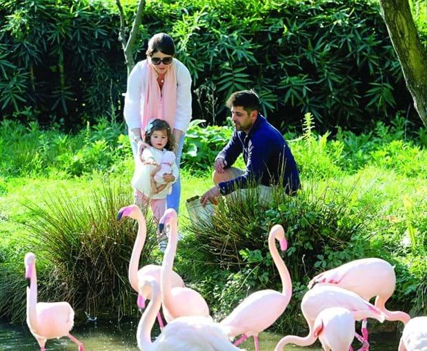 O zoo de Lourosa é o único dedicado às aves