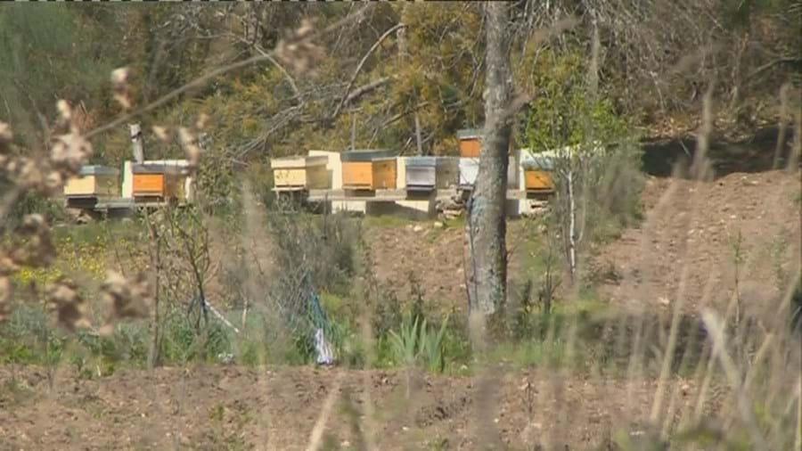 Homem morre asfixiado depois de ser picado por abelhas em Moimenta da Beira