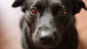 Dezassete cães drogados e largados em descampado em Loures