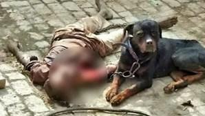 Cão mata dono e come a carne durante uma hora