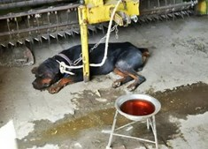 Os vestígios de sangue na água do animal