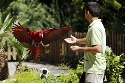 É no Bosque Encantado que se realiza esta espetacular demonstração de voo, onde se pode observar esplendorosas aves cruzar os céus e aterrar junto aos visitantes