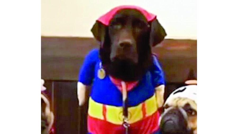 'Super-cão' arruína competição de comida