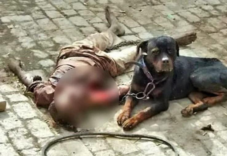 O cão Tiger não saiu de junto do cadáver do dono até ser encurralado pela polícia e por populares