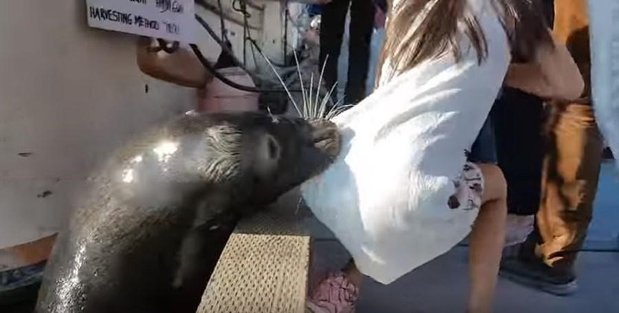 Leão-marinho abocanha a menina