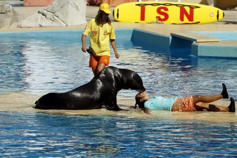 A Baía dos Golfinhos é um dos melhores delfinários da Europa e pioneira na apresentação de golfinhos e leões-marinhos em simultâneo na mesma exibição