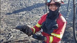 Bombeiros salvam lontra de fogo no Montijo