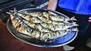 Corrida à sardinha já começou em Portimão