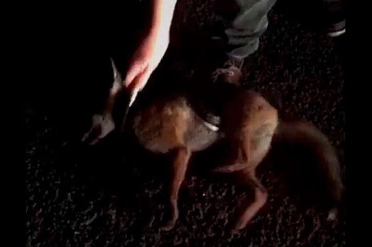 Alunos de veterinária competem para ver quem mata animal maior