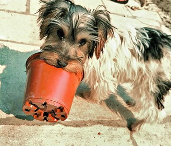 A cadelinha 'Giovanna' ladrou sem parar até os donos acordarem