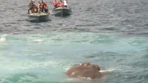 Elefante bebé salvo do oceano pela Policia Marítima
