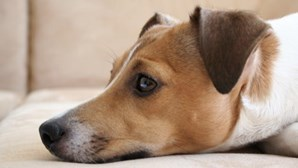 Cão salva bebé após ouvir choro e puxa dono até onde a criança foi abandonada