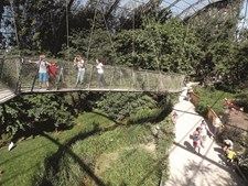 Rede de pontes suspensas começa no aviário e percorre todo o Pairi Daiza