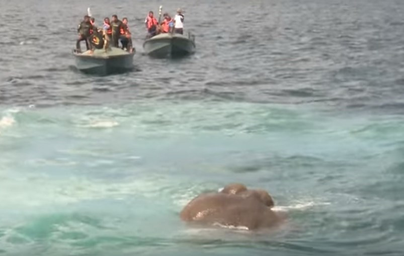 Kokkilai, Sri Lanka, Marinha, Chaminda Walakuluge, acidentes e desastres, ambiente, elefante