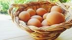 Consumo de ovos pode reduzir riscos de doenças cardiovasculares