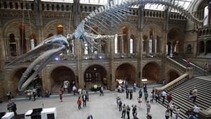 Menino de 10 anos corrige museu de Londres
