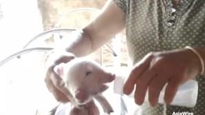 Porco nasce com duas cabeças e um terceiro olho