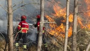 Proença-a-Nova perdeu 466 hectares de floresta no fogo que deflagrou em Oleiros