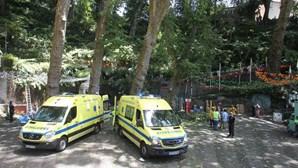 Quatro testemunhas ouvidas esta sexta-feira no caso da queda da árvore no Funchal