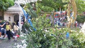 Autarca do Funchal afirma-se solidário com arguidos do caso da queda de árvore