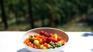 Tomate: O fruto das 1001 variedades