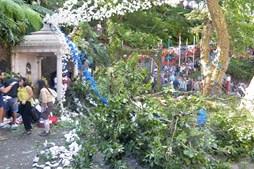 Queda de árvore na Madeira fez 13 mortos