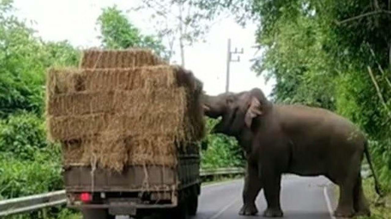 Um casamento de parar o trânsito |