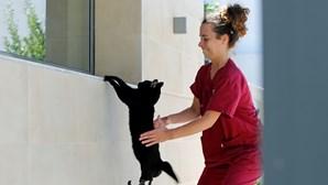 Coutinho, o gato biónico que se salvou em Portugal