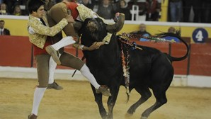 Forcado de 26 anos morre colhido por touro na Moita